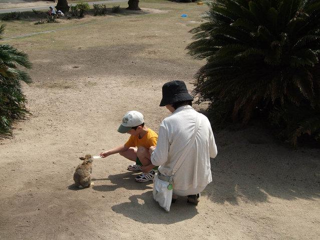 Rabbit Island in Japan