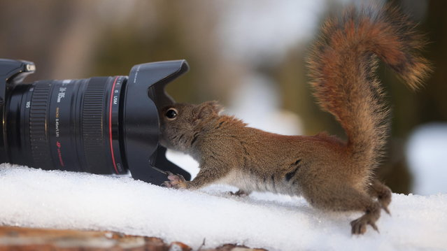 """Autoportrait"". (Photo by Andre Villeneuve)"