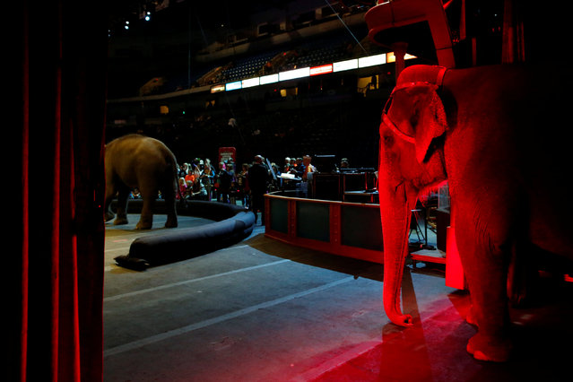 """An elephant stands in the entrance of the arena during pre-show entertainment at Ringling Bros and Barnum & Bailey Circus' """"Circus Extreme"""" show at the Mohegan Sun Arena at Casey Plaza in Wilkes-Barre, Pennsylvania, U.S., April 29, 2016. (Photo by Andrew Kelly/Reuters)"""