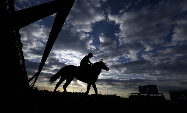 A horse goes for a morning workout at Churchill Downs in Louisville, on May 3, 2014. (Photo by Matt Slocum/Associated Press)