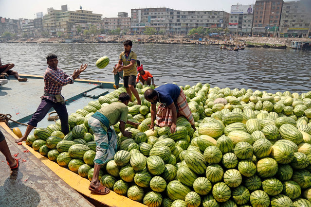 Bangladeshi laborers unload watermelons form a boat at the Buriganga River in Dhaka, Bangladesh, 01 April 2019. Watermelon is in season and is filling the city markets as it arrives from southern Bangladesh. (Photo by Monirul Alam/EPA/EFE)