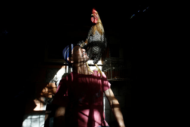 "Martin Herrera poses with his favourite rooster ""Paquito"" in his house in San Jose, Costa Rica April 27, 2017. (Photo by Juan Carlos Ulate/Reuters)"