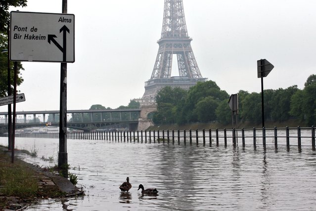 Ducks swim on the overflowing embankments of Paris, Wednesday, June 1, 2016. Paris City Hall closed roads along the shore of the Seine from the southwest edge of the city to the neighborhood around the Eiffel Tower as the water level has risen 4.3 meters (14 feet 1 inches) higher than usual. (Photo by Thibault Camus/AP Photo)