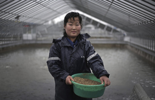 """In this April 17, 2017, photo, Kim Jin Ok, 25, poses for a portrait as she feeds catfish at the Pyongyang Catfish Farm, in Pyongyang, North Korea. Her motto: """"Working hard at my job pleases our leader Kim Jong Un"""". (Photo by Wong Maye-E/AP Photo)"""