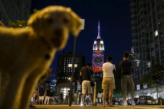A dog passes by as people watch images being projected onto the Empire State Building, as part of an endangered species projection to raise awareness, in New York August 1, 2015. (Photo by Eduardo Munoz/Reuters)