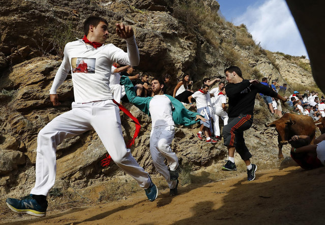 "Bulls chase runners during the of Pilon bull run held in Falces, Navarra, northern Spain, 15 August 2017. Security has been tightened during the event after a woman died the previous year falling down a cliff. Four people were attended at the end of the run due to minor injuries. ""El Pilon"" bull run is held on a hill where runners have to avoid the herd of cows on a 800 meter long and narrow slope with the mountain on one side and a steep cliff on the other. (Photo by Jesus Diges/EPA)"
