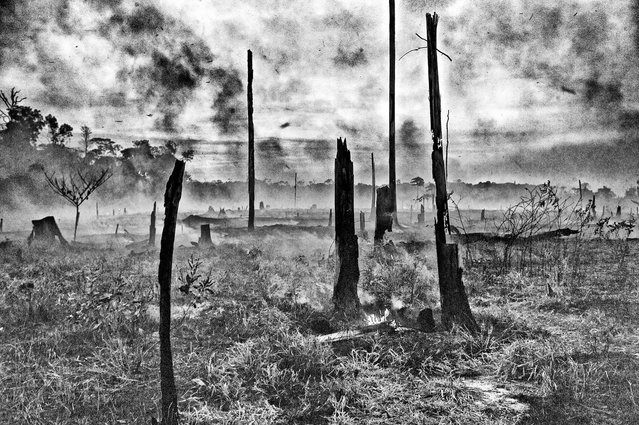 The smouldering remains of an area of Amazon rainforest cleared using slash and burn for cattle ranching, Acre, Brazil. (Photo by Charlie Hamilton James/Photographers Against Wildlife Crime/Wildscreen/The Guardian)