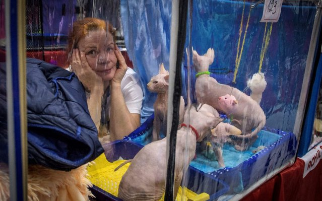 """An owner presents her Sphynx cats during the """"Valencia Cup"""" international cat exhibition in Moscow, Russia on November 18, 2017. (Photo by Mladen Antonov/AFP Photo)"""