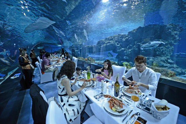 Aquarium visitors attend a dinner party in an underwater tunnel in Tianjin, China on September 15, 2016. (Photo by Feature China/Barcroft Images)