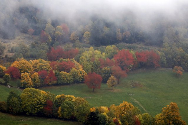 Late autumn colours mark a change in season in the Vosges mountains in the Alsace region,  Eastern France, October 11, 2015. (Photo by Jacky Naegelen/Reuters)