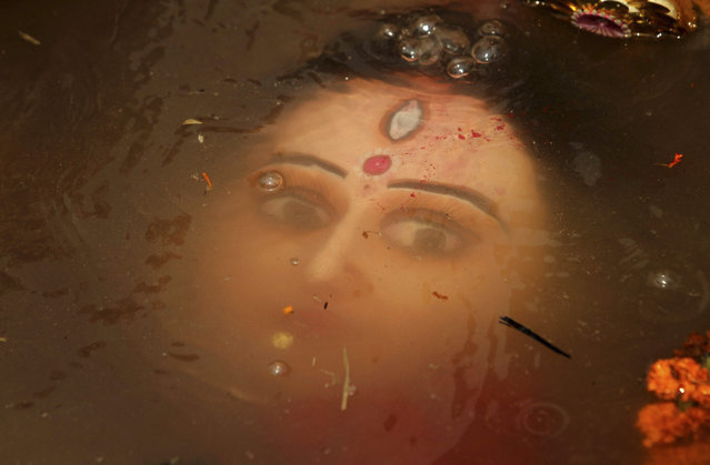 An idol of Hindu goddess Durga floats in water as devotees immerse the same in the River Kuakhai after the Durga Puja festival in Bhubaneswar, India, Saturday, October 24, 2015. The immersion of idols marks the end of the festival that commemorates the slaying of a demon king by lion-riding, 10-armed goddess Durga, marking the triumph of good over evil. (Photo by Biswaranjan Rout/AP Photo)