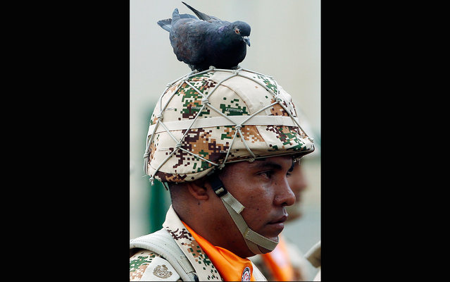 A pigeon sits on the helmet of a soldier during the farewell ceremony for Colombian troops that will serve at the Multinational Force and Observers (MCO), the international peacekeeping force that oversees the terms of the peace treaty between Egypt and Israel, in Bogota, Colombia, Wednesday, April 3, 2013. (Photo by Fernando Vergara/AP Photo)