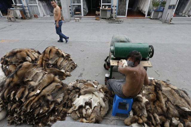A worker (R) looks back as he trims raccoon dog fur outside a store at a fur market in Chongfu township, Zhejiang province September 13, 2013. (Photo by William Hong/Reuters)