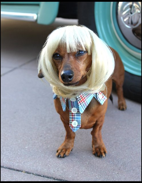 Blond bowl wig. (Photo by Cushzilla/BNPS)