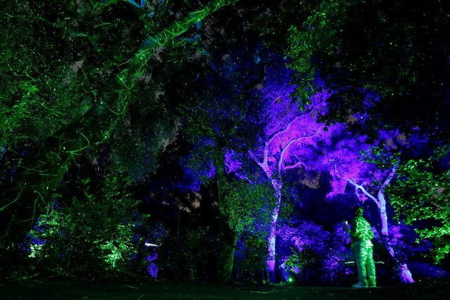 "A visitor watches the exhibit ""Enchanted: Forest of Light"" at Descanso Gardens in La Canada Flintridge, California U.S., December 9, 2016. (Photo by Mario Anzuoni/Reuters)"