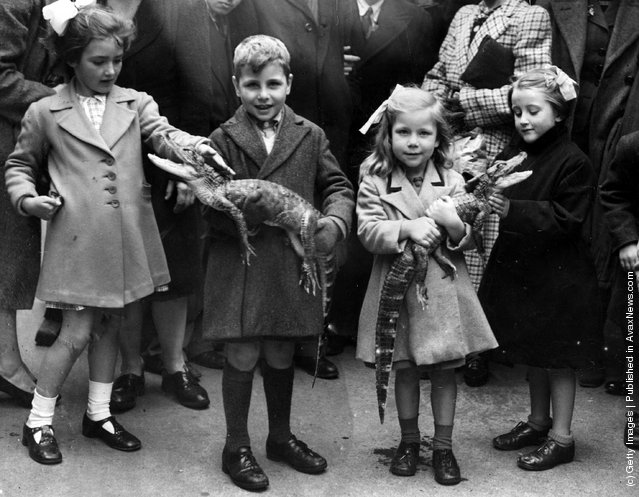 Children playing with baby alligators, 1943
