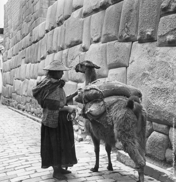 A Peruvian woman leads her llama through the old Inca town of Cuzco, high in the Andes, 1955