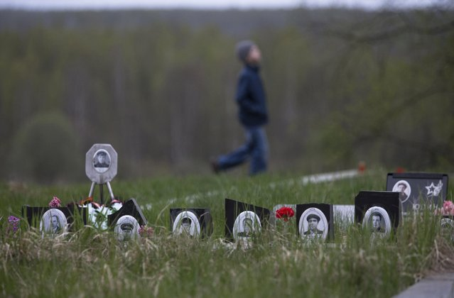In this photo taken Thursday, May 7, 2015 photo, a boy walks after a reburial ceremony of remains of Soviet soldiers killed during World War II, at the Sinyavino Heights memorial near the village of Sinyavino, 50 km (31 miles) east of  St. Petersburg, Russia. (Photo by Dmitry Lovetsky/AP Photo)