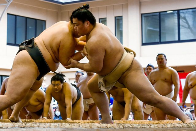 "Sumo wrestlers watch fellow athletes compete during the warm-up bouts at the ""Honozumo"" ceremonial sumo tournament at the Yasukuni Shrine in Tokyo April 3, 2015. (Photo by Thomas Peter/Reuters)"