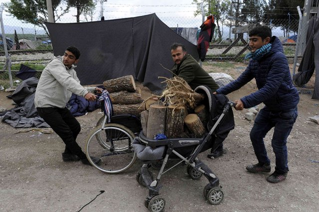 Men push carts with firewood at a makeshift camp for migrants and refugees at the Greek-Macedonian border near the village of Idomeni, Greece, April 11, 2016. (Photo by Alexandros Avramidis/Reuters)