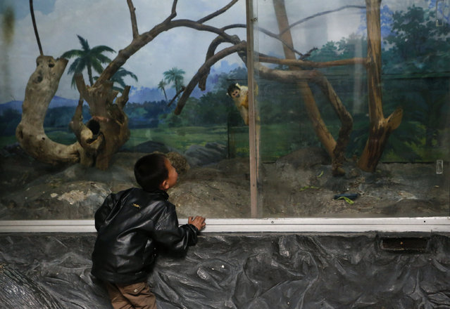 A North Korean boy watches a squirrel monkey at a zoo in Pyongyang, North Korea Thursday, April 26, 2012. (Photo by Vincent Yu/AP Photo)
