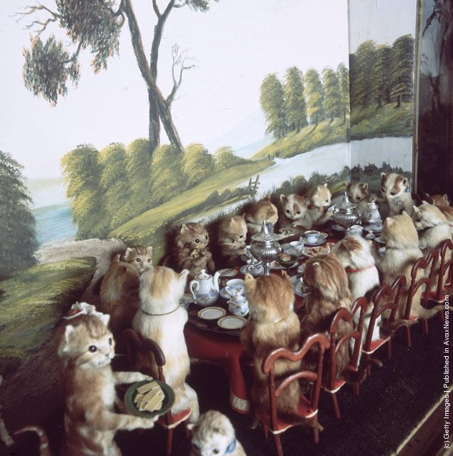 Victorian stuffed animals created by taxidermist Walter Potter at Potter's Museum of Curiosity