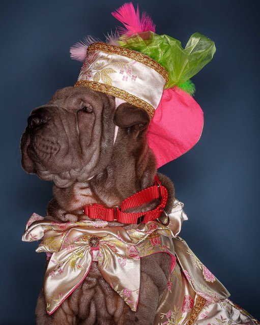 Five-month-old Carly LeRolls Gottesman. Carly was crowned the 2014 Pooch Prom queen. (Photo by Thomas Cordy/The Palm Beach Post)