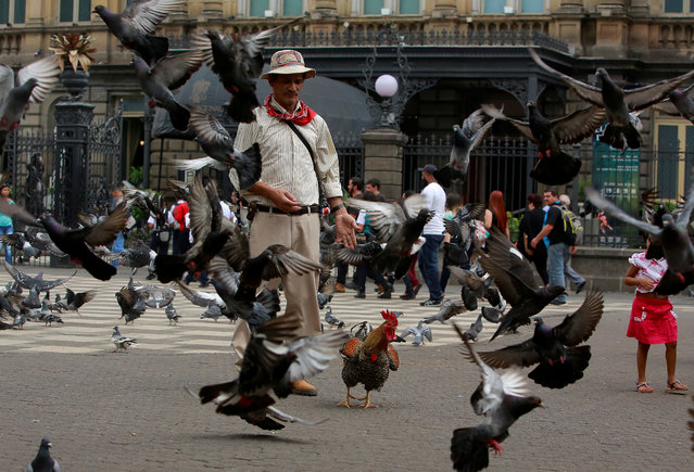 "Martin Herrera walks with his favourite rooster ""Paquito"" among pigeons at the Culture Square in San Jose, Costa Rica April 27, 2017. (Photo by Juan Carlos Ulate/Reuters)"