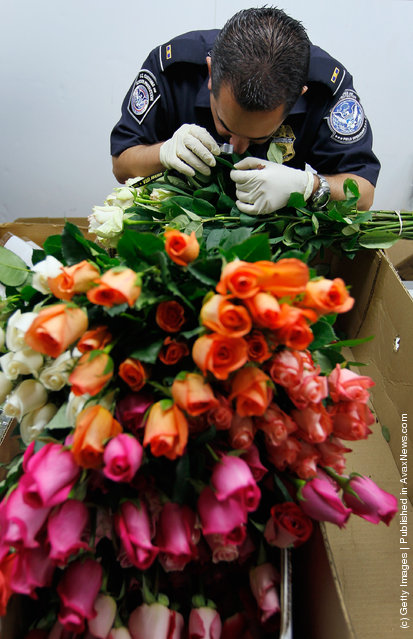A U.S. Customs and Border Protection agriculture specialists uses a magnifying glass to inspect flowers for any foreign pests or diseases at the UPS facility at Miami International Airport