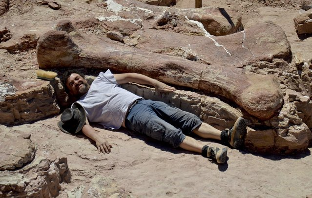 In this January 2014 photo released on Saturday, May 17, 2014 by the Museo Paletontológico Egidio Feruglio, Spanish paleontologist Jose Ignacio Canudo lies alongside a sauropod dinosaur femur, believed to be the largest in the world, in Trelew, Argentina. Paleontologists from the Museo Paletontológico Egidio Feruglio, announced Friday, May 16, 201, the discovery of the fossil remains of the sauropod dinosaur near Trelew. (Photo by AP Photo/Museo Paletontológico Egidio Feruglio)