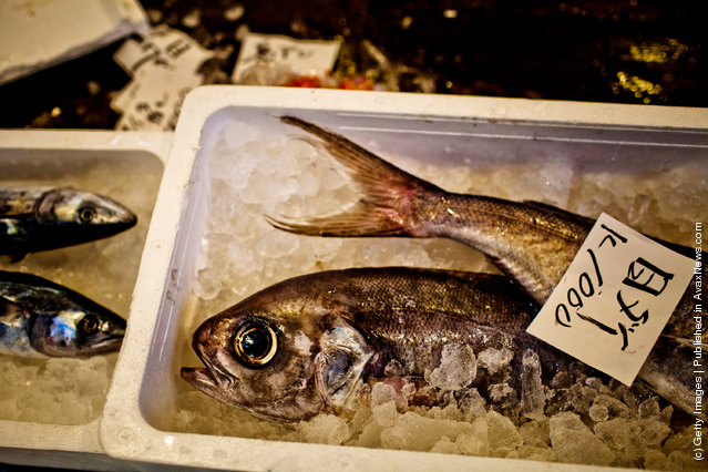 Fish are displayed for sale packed in ice at the Tsukiji fish market