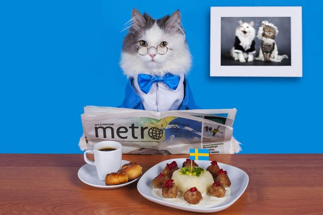 Reading the Metro, enjoying some Swedish meatballs. (Photo by Svetlana Valyiskaya/Mercury)