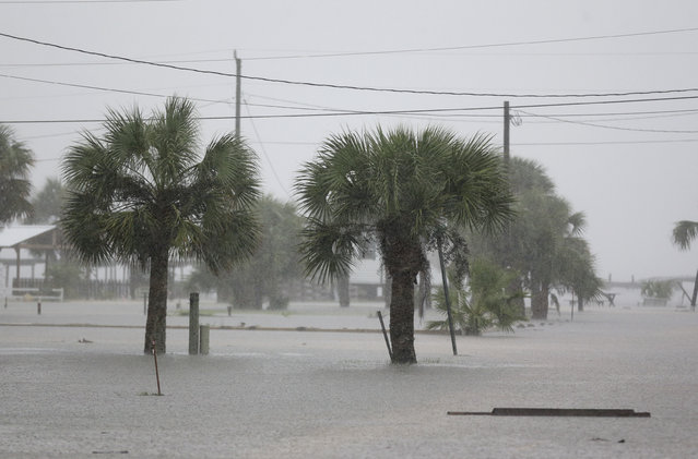 Ground water begins to flood some low areas as Tropical Storm Hermine heads inland Thursday, September 1, 2016, in Dekle Beach, Fla. A hurricane warning was in effect for Florida's Big Bend from the Suwannee River to Mexico Beach. (Photo by John Raoux/AP Photo)