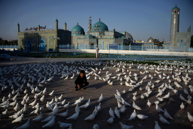 """An Afghan boy feeds pigeons at the Hazrat-i- Ali shrine in Mazar-i Sharif on September 12, 2016. Afghans started celebrating Eid al-Adha or """"Feast of the Sacrifice"""", which marks the end of the annual hajj or pilgrimage to Mecca and is celebrated in remembrance of Abraham's readiness to sacrifice his son to God. (Photo by Farshad Usyan/AFP Photo)"""