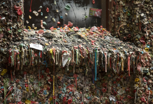 Twenty years worth of chewing gum is pictured before its removal in Post Alley at the Pike Place Market in Seattle, Washington on November 11, 2015. A gum-covered wall in the US city of Seattle that had become a major tourist draw is finally getting a cleanup after more than two decades, officials said. She said the wall, started in an alley in 1991 by patrons of a nearby theater, had spread over the years as people sought space for their masticated mess. (Photo by Jason Redmond/AFP Photo)