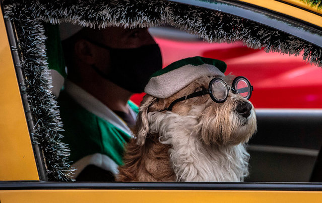 A taxi driver drives next to his dog fancy dressed as Santa Claus in Bogota on December 29, 2020. (Photo by Juan Barreto/AFP Photo)