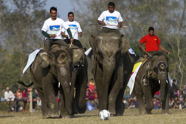 Mahuts on their elephants play soccer on the second day of the 12th Chitawan Elephant Festival at Sauhara, Chitawan, some 154 kilometer from the capital of Kathmandu, Nepal, 27 December 2015. (Photo by Hemanta Shrestha/EPA)