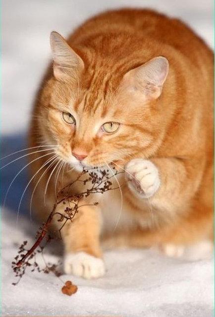 A Cat Didn't Like It