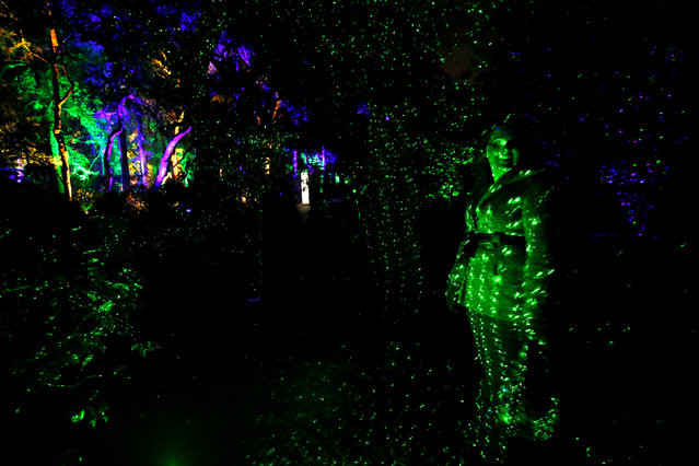 "A visitor stands in the light during the exhibit ""Enchanted: Forest of Light"" at Descanso Gardens in La Canada Flintridge, California U.S., December 9, 2016. (Photo by Mario Anzuoni/Reuters)"