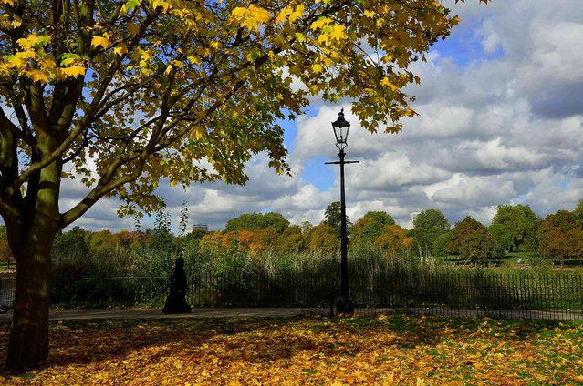 A visitor views the autumn colors in Hyde Park in London October 24, 2013. (Photo by Toby Melville/Reuters)