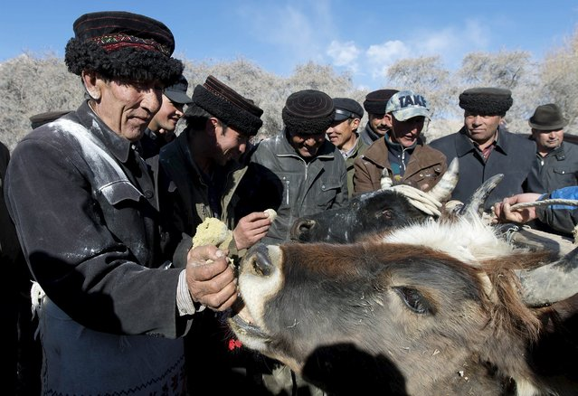 Tadjik feed their cattle as they take part in a festival celebration to welcome the coming Spring in Tadjik autonomous county, Kashgar, Xinjiang Uighur Autonomous Region, March 18, 2015. (Photo by Reuters/China Daily)
