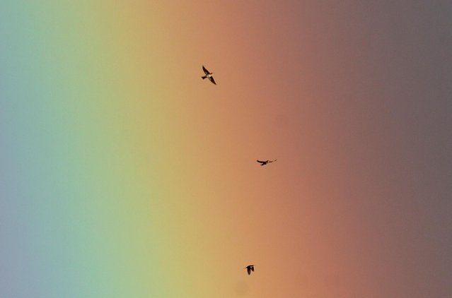 Birds fly as a rainbow is seen in the sky above Harpenden, Britain, December 23, 2020. (Photo by Peter Cziborra/Reuters)