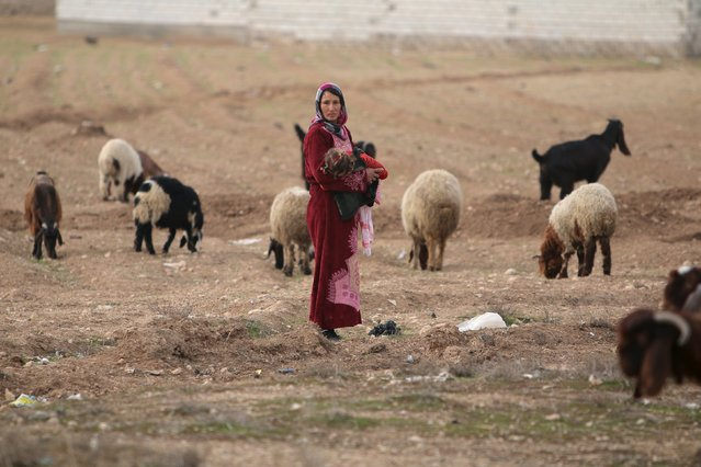 A woman carries a child while guiding sheep in Ain-Hosn village, southern countryside of Ras al-Ain, Syria February 1, 2016. (Photo by Rodi Said/Reuters)