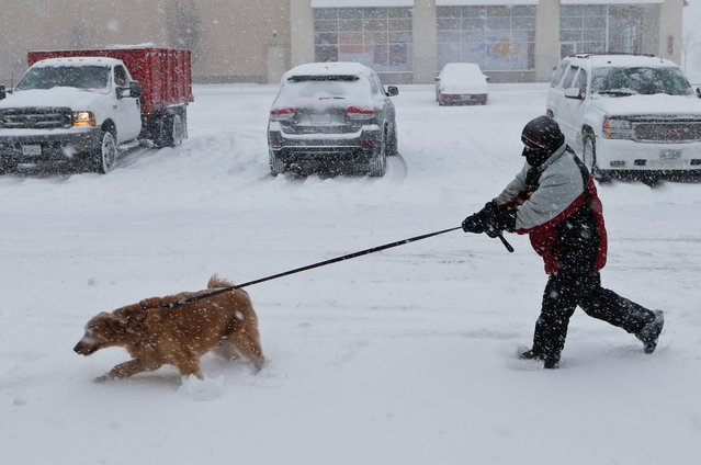 Ryan Metcalf tries to hang on to his golden retriever, Daisy, Sunday, January 5, 2014, in Brentwood, Mo. Metcalf said that Daisy loves the snow. (Photo by J. B. Forbes/AP Photo/St. Louis Post-Dispatch)
