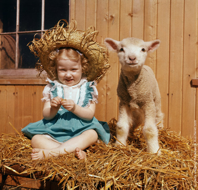 A young girl in a blue dress and straw hat sits next to a lamb on a stack of hay, 1940s