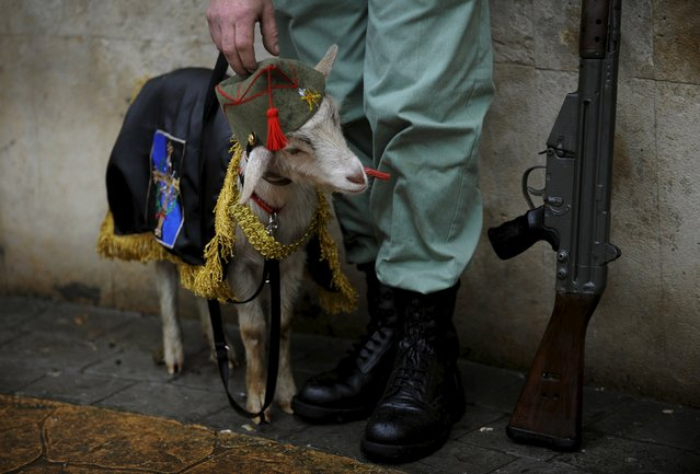"A member of the Brotherhood of Gentlemen Legionnaires of Asturias feeds its mascot after the governing body of the ""Estudiantes"" brotherhood decided that penance could not be carried out in the streets due to rain on Palm Sunday in Oviedo, northern Spain, March 20, 2016. (Photo by Eloy Alonso/Reuters)"