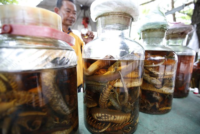 A picture made available on 17 May 2015 shows a Laotian man drinking a glass of a concoction made of pickled reptiles, among them snakes, centipedes and geckos, stored in large jars, a mixture believed by many to improve the health of people over 50, at a stall on the street of Luang Prabang, a UNESCO world heritage town, in the Lao Democratic Republic, 15 May 2015. (Photo by Barbara Walton/EPA)