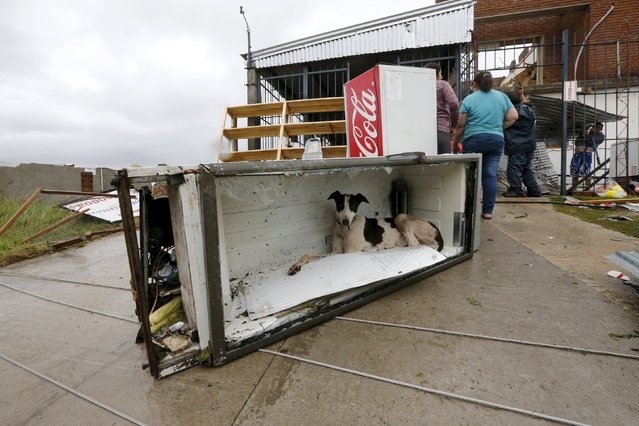 A dog rests in a broken fridge along a street in Dolores, the day after the city was hit by a tornado, April 16, 2016. (Photo by Andres Stapff/Reuters)