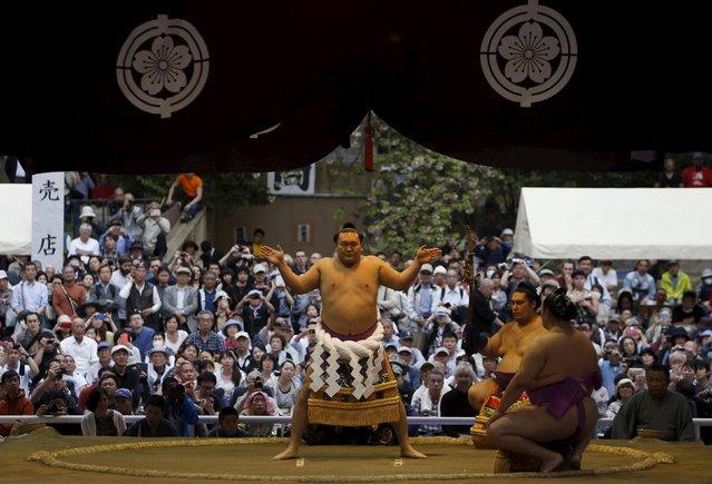 "Mongolia-born grand sumo champion Yokozuna Hakuho performs a ring-entering rite during the annual ""Honozumo"" ceremonial sumo tournament dedicated to the Yasukuni Shrine in Tokyo, Japan, April 18, 2016. (Photo by Yuya Shino/Reuters)"