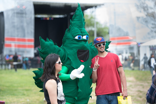 NORML provided a cannabis leaf costumed mascot at the National Cannabis Festival held on the grounds near RFK Stadium on April 23, 2016 in Washington, DC.   The fest  featured musicians, vendors and educational exhibits. (Photo by Kate Patterson/The Washington Post)